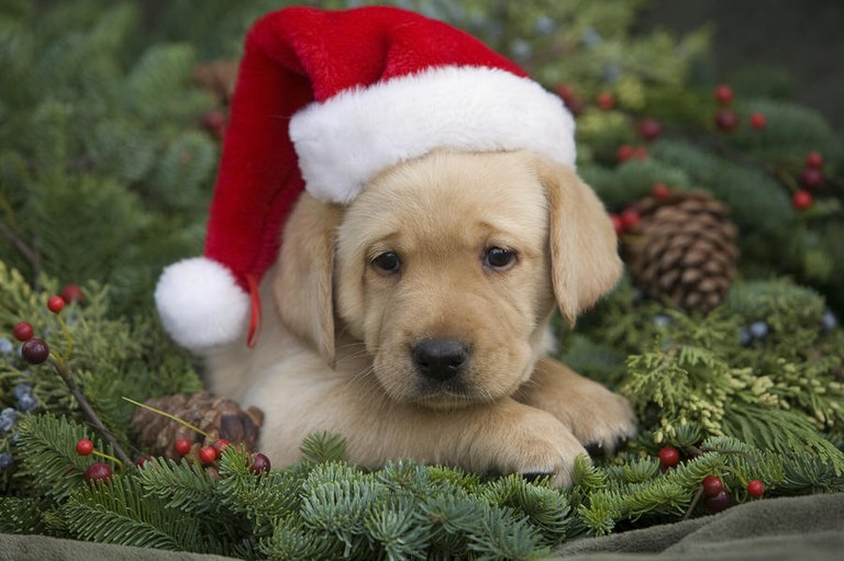 christmas-puppy-ron-dahlquist.jpg
